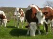 fournisseur agricole