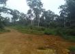 Terrain industriel de 2ha ou 1ha à vendre situé à la Dibamba