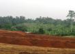 Terrain industriel de 2 ha à vendre situé à KRIBI