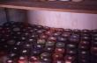 Semences de champignon