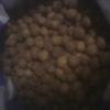 vente des semence de moabi