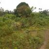 terrains titrés en vente à Douala et Kribi