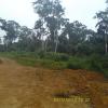 Terrain d'habitation de 3000 m² à vendre situé à la Dibamba