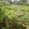 Terrain d'habitation de 2000 m² à vendre situé à la Dibamba