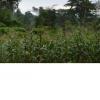 Terrain titré à vendre à Tsinga village (Yaounde)