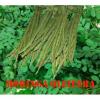 Vente de produit naturel moringa