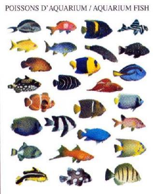 tout pour l aquarium petites annonces gratuites au congo