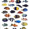 Tout pour l'aquarium