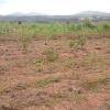 SERVICED PLOTS OF LAND FOR SALE