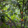 310 Acres of Farming Land for sale in Eastern Region Achiase Bonsu