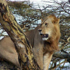 4 Days Holiday to Masai Mara