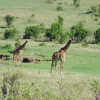 Masai Mara Safari Tours