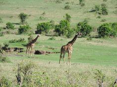 Masai Mara Safari Tours
