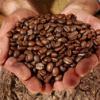 CAFE MOULU 100% ROBUSTA