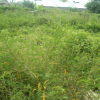 land for sale in G.R.A phase3 port harcourt