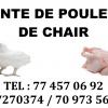 VENTE DE POULETS DE CHAIR POSSIBILITÉ DE CRÉDIT