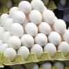 Vente d'œufs frais fermier tous formats