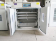 Automatic poultry egg incubator for sale