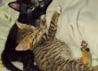 3 kittens urgently needing homes