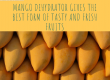 Mango dehydrator
