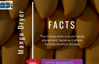 mango dryer