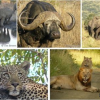 Book Best Trip of Hluhluwe Game Reserve in South Africa