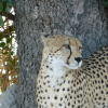 Book Your South Africa Safari With Tim Brown Tours