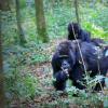 3 day gorilla trekking safari in Uganda