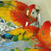 Young and baby parrots for sale