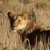 Kapama Private Game Reserve Wildlife Safari