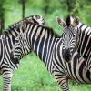 Kruger Park Safari Experts