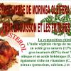 l'huile végétale de moringa oleifera