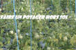 AGRICULTURE HORS SOL