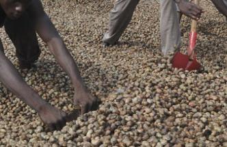 recherche des acheteurs sérieux de noix de cajou (anacarde)