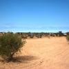 A vendre un grand terrain (Sania d'oliviers)