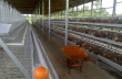 Layer chicken cages / Poultry cages